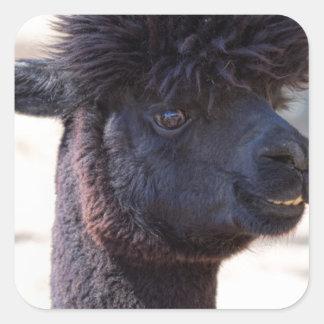 Peruvian Alpaca With Crazy Hair 2 Square Sticker