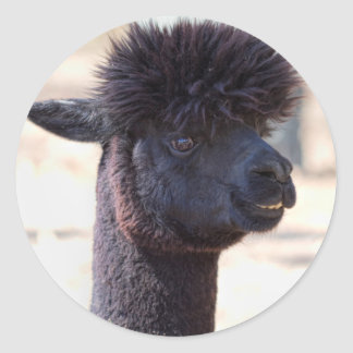 Peruvian Alpaca With Crazy Hair 2 Round Sticker