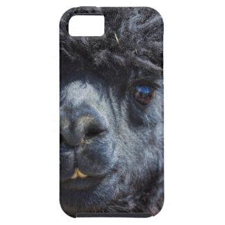 Peruvian Alpaca With Crazy Hair iPhone SE/5/5s Case