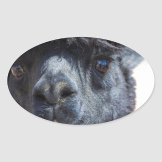 Peruvian Alpaca With Crazy Hair Oval Stickers