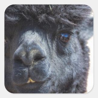 Peruvian Alpaca With Crazy Hair Square Stickers