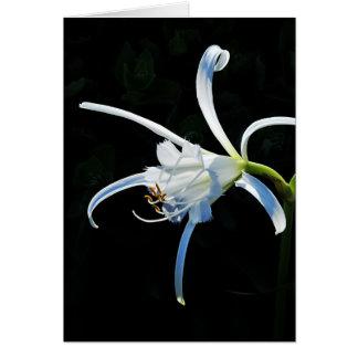 Peruvian Daffodil White Ribbons Greeting Card