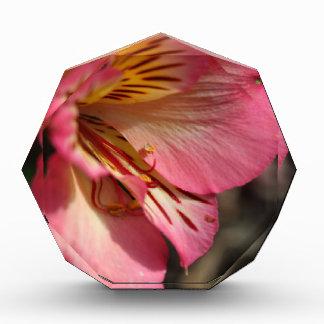 Peruvian lily (Alstroemeria aurea) Acrylic Award
