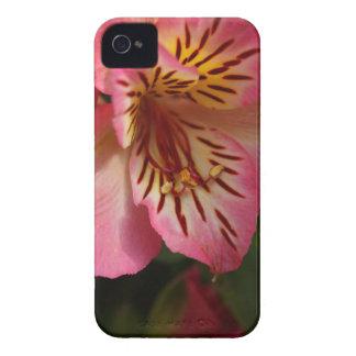 Peruvian lily (Alstroemeria aurea) iPhone 4 Case