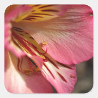 Peruvian lily (Alstroemeria aurea) Square Sticker