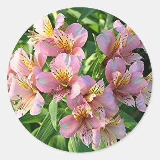 Peruvian lily (alstroemeria) flowers in bloom classic round sticker