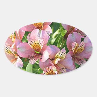 Peruvian lily (alstroemeria) flowers in bloom oval sticker