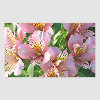 Peruvian lily (alstroemeria) flowers in bloom rectangular sticker