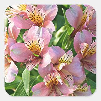 Peruvian lily (alstroemeria) flowers in bloom square sticker