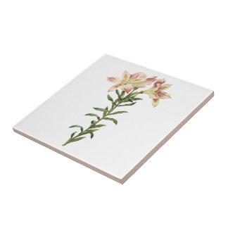 Peruvian lily(Alstromeria pelegrina) by Redouté Ceramic Tile