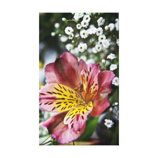 Peruvian Lily and gypsophila flower canvas print