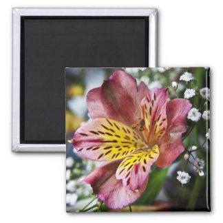 Peruvian Lily and gypsophila flower fridge magnet