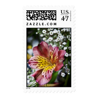 Peruvian Lily and gypsophila flower postage stamps