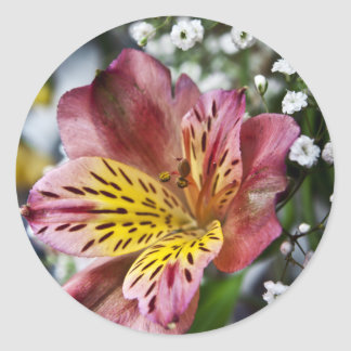 Peruvian Lily and gypsophila flower round stickers