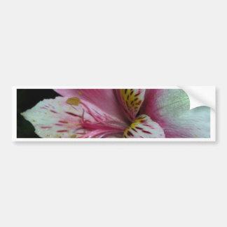 Peruvian Lily Bumper Stickers