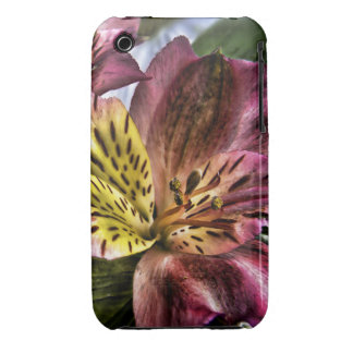 Peruvian Lily flower iPhone 3g 3gs CaseMate case