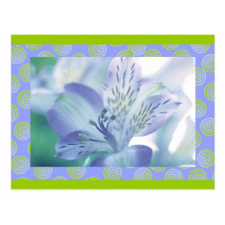 Peruvian Lily, Mauves, macro floral, template Postcard
