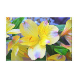 Peruvian Lily Stretched Canvas Prints
