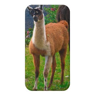 Peruvian Llama - iPhone 4 Case