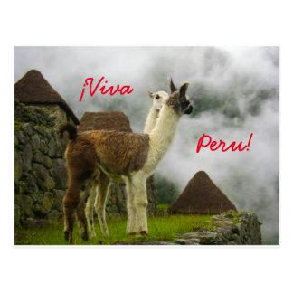 Perúvian Llamas Kissing Postcard