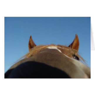 Peruvian Paso Gaited Horse Filly - Nose Greeting Card