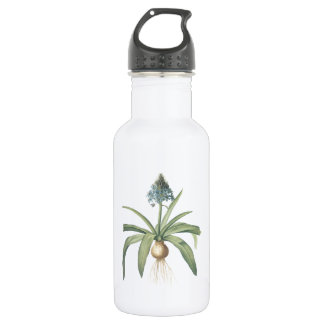 peruvian squill(Scilla peruviana) by Redouté Stainless Steel Water Bottle