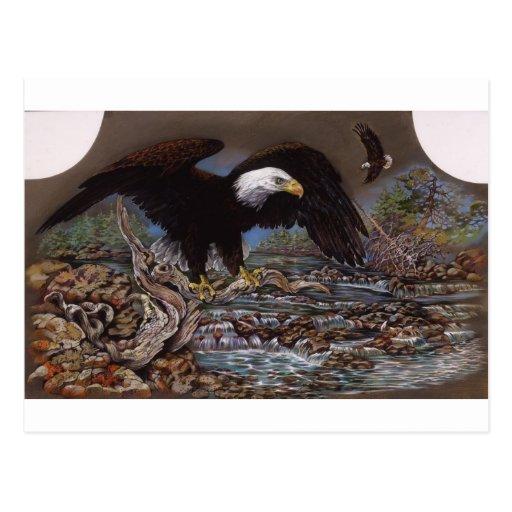 Pesca americana de Eagle calvo Postal