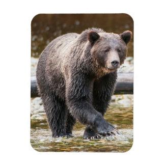 Pesca de Brown o del oso grizzly (Ursus Arctos) Iman Flexible