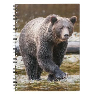 Pesca de Brown o del oso grizzly (Ursus Arctos) Libretas