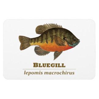 Pesca de la brema del Lepomis macrochirus Imanes Flexibles