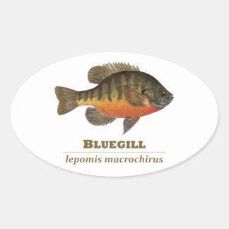 Pesca de la brema del Lepomis macrochirus Pegatina Ovalada
