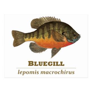 Pesca de la brema del Lepomis macrochirus Tarjetas Postales