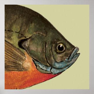 Pesca de la brema póster