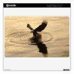 Pesca de la foto de la fauna de Eagle calvo, Anima Calcomanías Para El MacBook