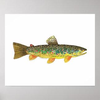 Pesca de la trucha de Brown Póster