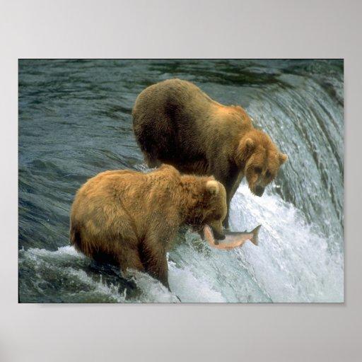 Pesca de los osos 1 póster