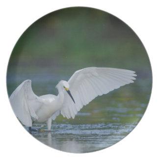 Pesca del Egret nevado en una charca de Tejas Plato