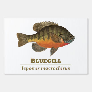 Pesca del Lepomis macrochirus Señal