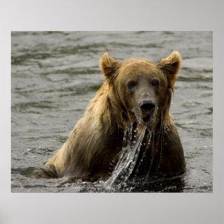 Pesca del oso de Brown en Kodiak Poster