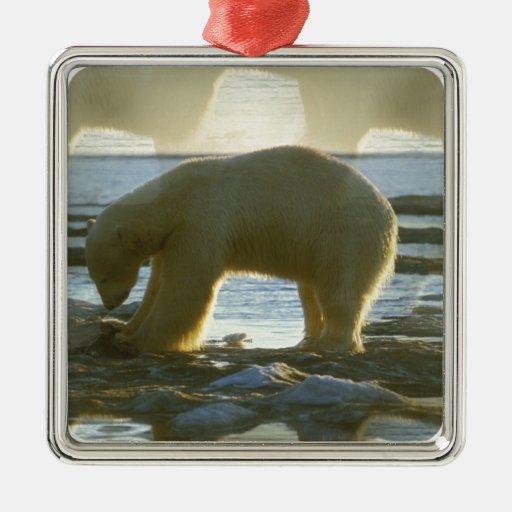 Pesca del oso polar adorno cuadrado plateado
