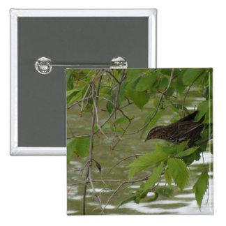 pesca negra de alas rojas del pájaro de una rama pin cuadrada 5 cm