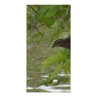 pesca negra de alas rojas del pájaro de una rama plantilla para tarjeta de foto