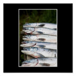 Pesca Posters