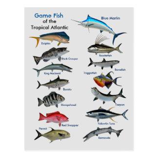 Pescado de la postal atlántica tropical