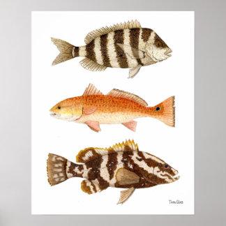 Pescado del agua salada póster