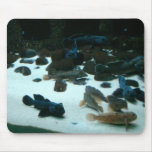 pescados 4 Mousepad Tapete De Ratones