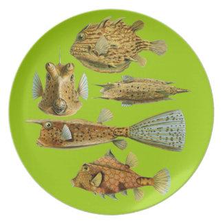Pescados adaptables de Haeckel Platos