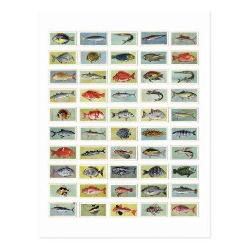 Pescados africanos postal