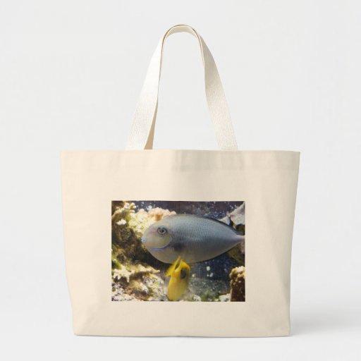 pescados, agua salada bolsa