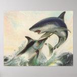 Pescados - aguja negra y tiburón de Mako Poster